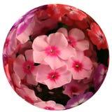 Sphère de fleur. Photo libre de droits
