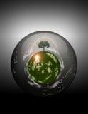 Sphère herbeuse à l'intérieur de la sphère en verre Photographie stock libre de droits
