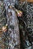 Sphères d'or dans le tronc photos stock