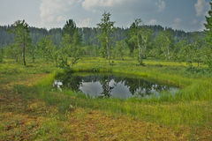 Sphagnum bog. In river valley of Usa Royalty Free Stock Photos