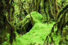 Sphagnum moss 2. Stock Photography