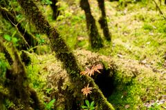 Sphagnum moss in Ang Ka Luang Nature Trail. Is an educational nature trail inside a rainforest on the peak of Doi Inthanon National Park in Chiang Mai, Thailand Stock Photos