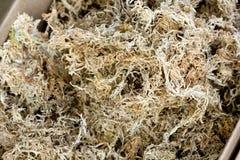 Sphagnum moss Stock Photography