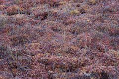 Sphagnum moss pattern Royalty Free Stock Images