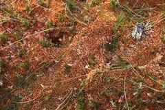 Sphagnum moss pattern Stock Photos