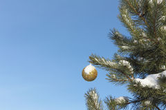 The sphere hanging on a branch Royalty Free Stock Images