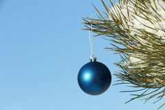 The  sphere hanging on a coniferous branch Royalty Free Stock Photography