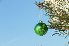 The  sphere hanging on a coniferous branch Stock Photo