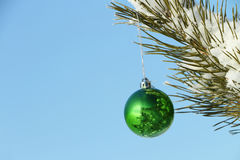 The  sphere hanging on a coniferous branch Royalty Free Stock Photos