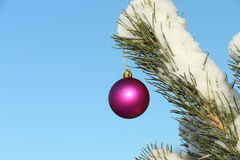 The  sphere hanging on a coniferous branch Stock Images