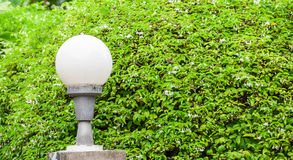 Sphere lamp on lamppost with Wrightia religiosa plant background Stock Image