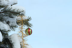 Sphere on a pine branch Stock Photography