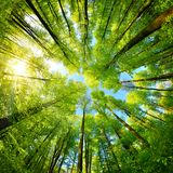 Spheric панорама в лесе, великолепный верхний взгляд к treetops стоковые изображения