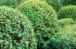 spheric buske Arkivbilder