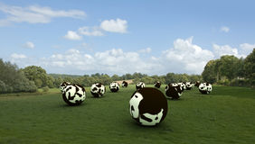 Spheric cows Royalty Free Stock Image