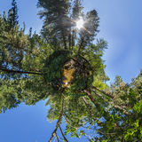 Spherical panorama of 360,180 creek in a dense forest green litt Stock Image