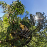 Spherical panorama of 360,180 creek in a dense forest green litt Stock Photo
