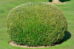 Spherical topiary Stock Image