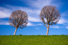 Spherical trees Royalty Free Stock Photography