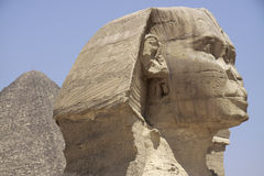 Free Sphinx Royalty Free Stock Photography - 19845017