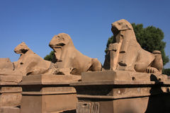 Sphinx Alley Stock Image