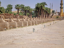 Sphinx alley. In the temple of luxor Stock Photography