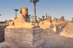 Sphinx alley in Luxor temple Stock Image