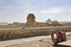 A sphinx Royalty Free Stock Image