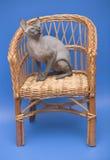 Sphinx de chat. photographie stock libre de droits