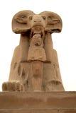 Sphinx della ram Fotografia Stock