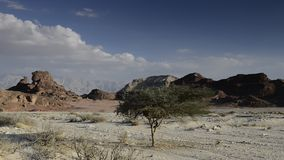 Sphinx der Wüste, Israel stock footage
