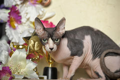 Sphinx and flowers. Young elegant sphinx and flowers, trophies cups and medals Stock Images