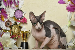 Sphinx and flowers. Young elegant sphinx and flowers, trophies cups and medals Stock Image