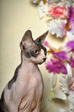 Sphinx and flowers. Young elegant sphinx and flowers Royalty Free Stock Photo