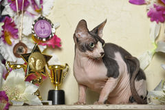 Sphinx and flowers. Young elegant sphinx and flowers, trophies cups and medals Royalty Free Stock Image