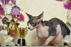 Sphinx and flowers. Young elegant sphinx and flowers, trophies cups and medals Stock Photos