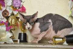 Sphinx and flowers. Young elegant sphinx and flowers, trophies cups and medals Royalty Free Stock Photography