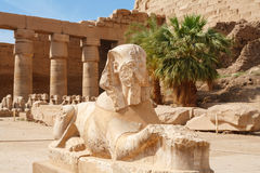 Sphinx. Ναός Karnak, Luxor, Αίγυπτος Στοκ εικόνα με δικαίωμα ελεύθερης χρήσης