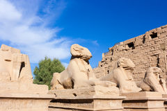 Sphinx line the entrance to Karnak Temple. A line of Sphinx statues line the entrance to the Karnak Temple complex in Luxor, Egypt royalty free stock photo