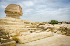 The Sphinx looking out towards Giza, Egypt Royalty Free Stock Photos