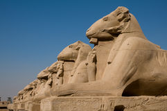 Sphinx in Luxor Lizenzfreies Stockbild