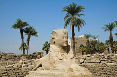 Sphinx at Luxor Royalty Free Stock Photo