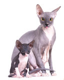 Sphinx, mom cat and kitten Stock Photography