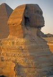 Sphinx på solnedgången Arkivfoto