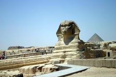 Sphinx Portrait  Stock Photos