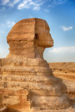Sphinx profile Royalty Free Stock Photos