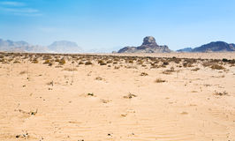 Sphinx rock in Wadi Rum desert Stock Photography