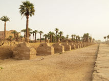Sphinx's Avenue in Luxor Stock Images