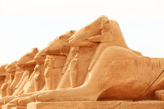 Sphinx sculptures Stock Image
