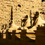 Sphinx from temple karnak Stock Images